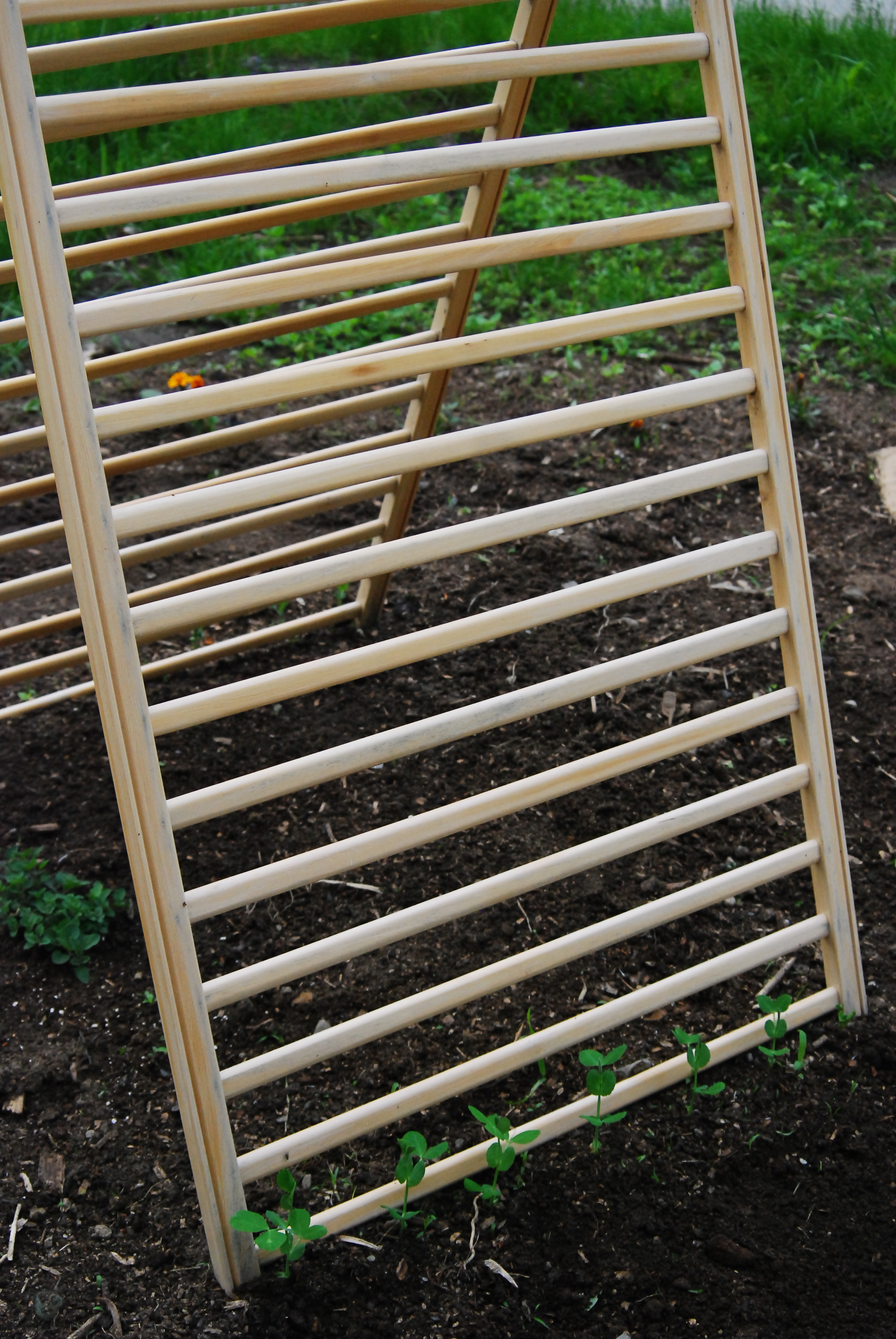 gardening patience learning from scratch club a cucumber trellis
