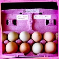 Albany Food Swap: Backyard Eggs!