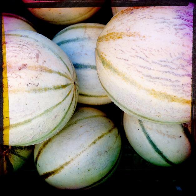 French Melons at Kilpatrick Family Farm