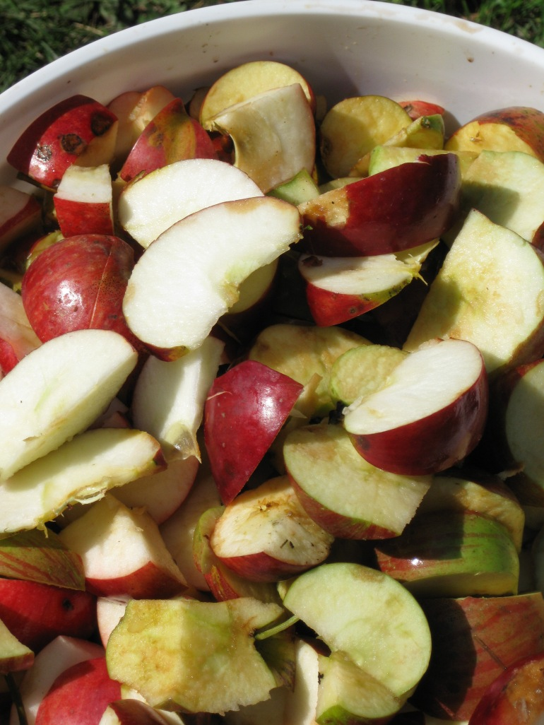 how to make cider from your own apples