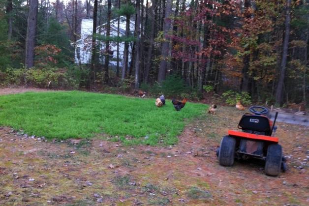 happy flock, happy gardener