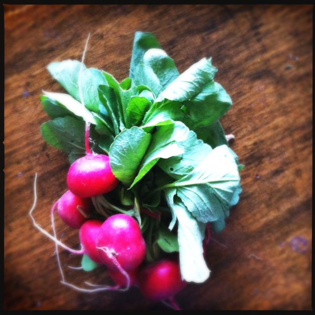 First Radishes of the Season!