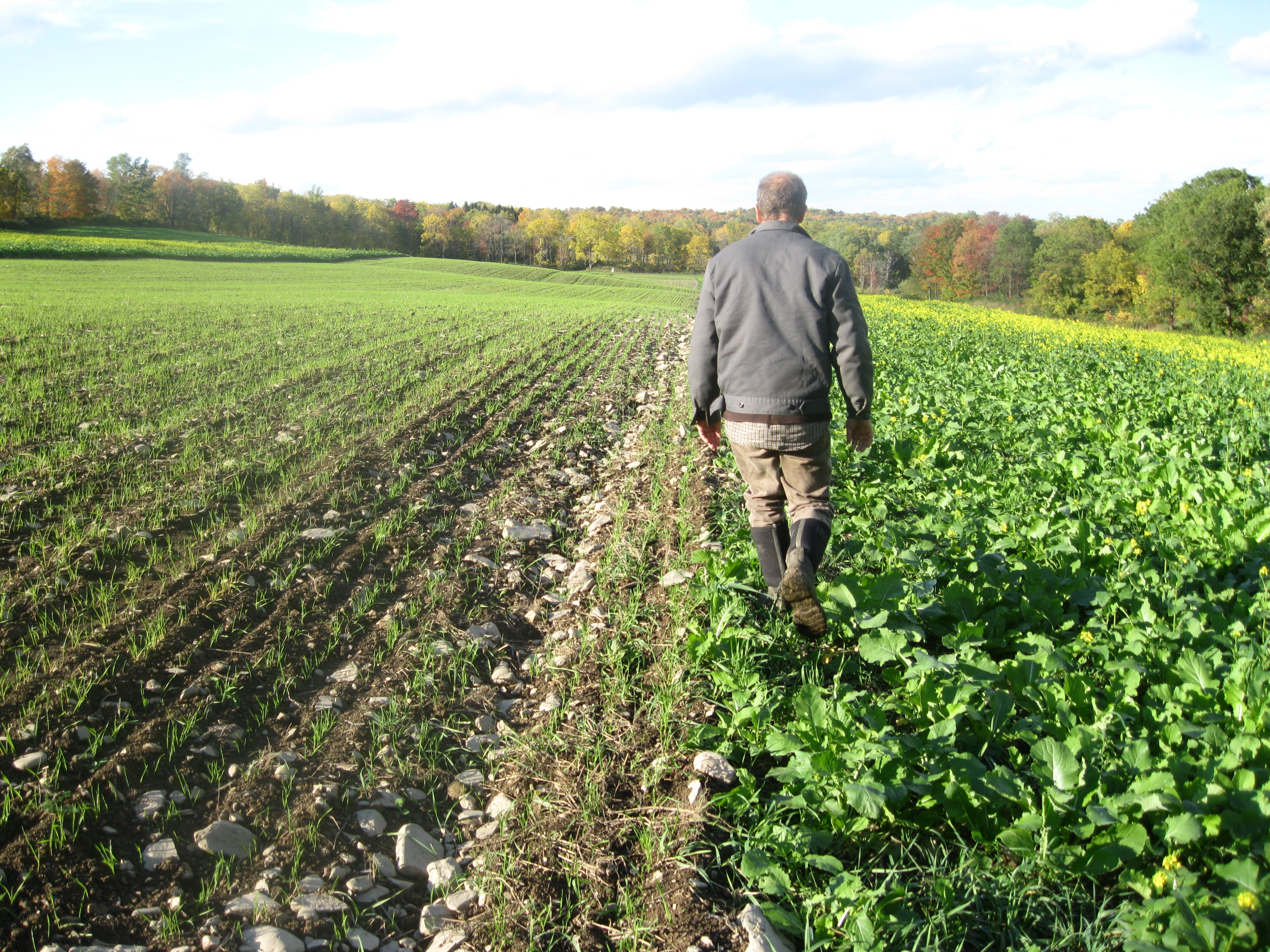 Scaling The Northeast Grain System Fall Plantings