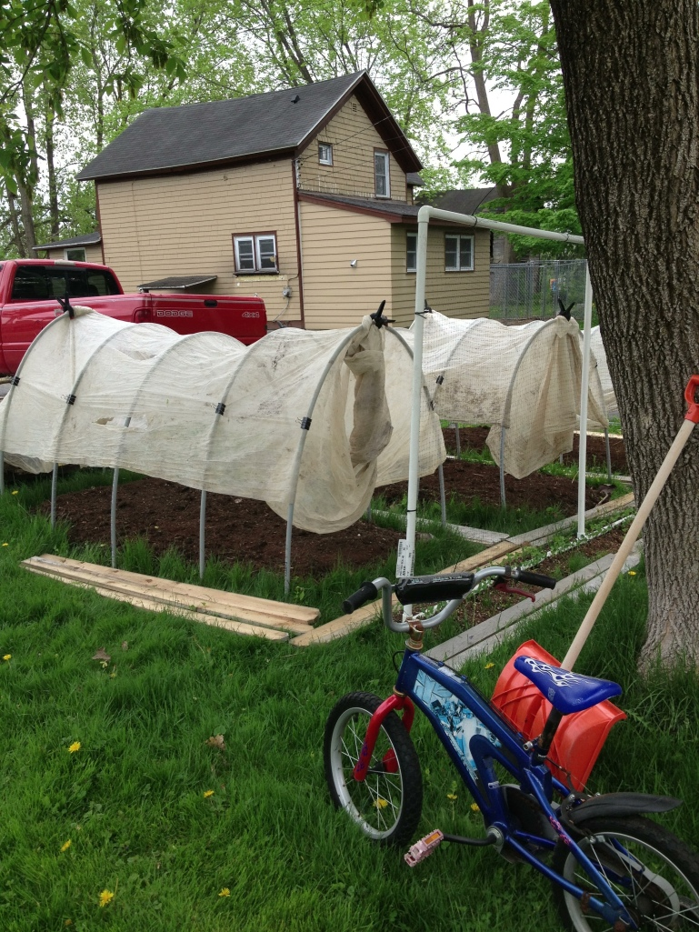 My growing area behind my house. I sort of made raised beds and then put hoops and row cover over them.