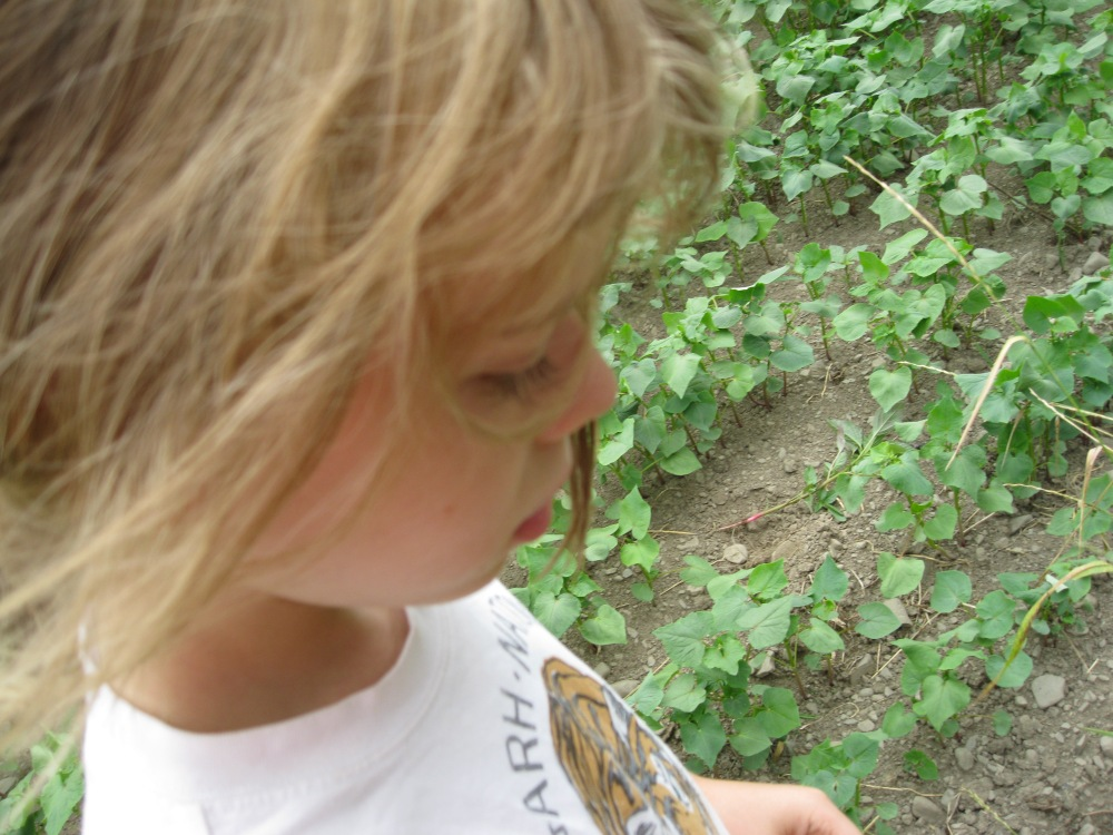 buckwheat and my young Felix in the field, 2011