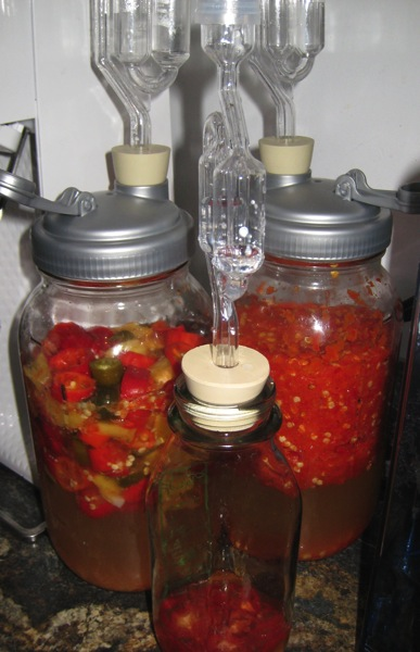 fermentation-in-progress.jpg