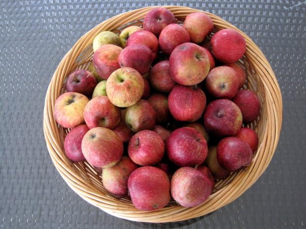 photo2 gleaned apples