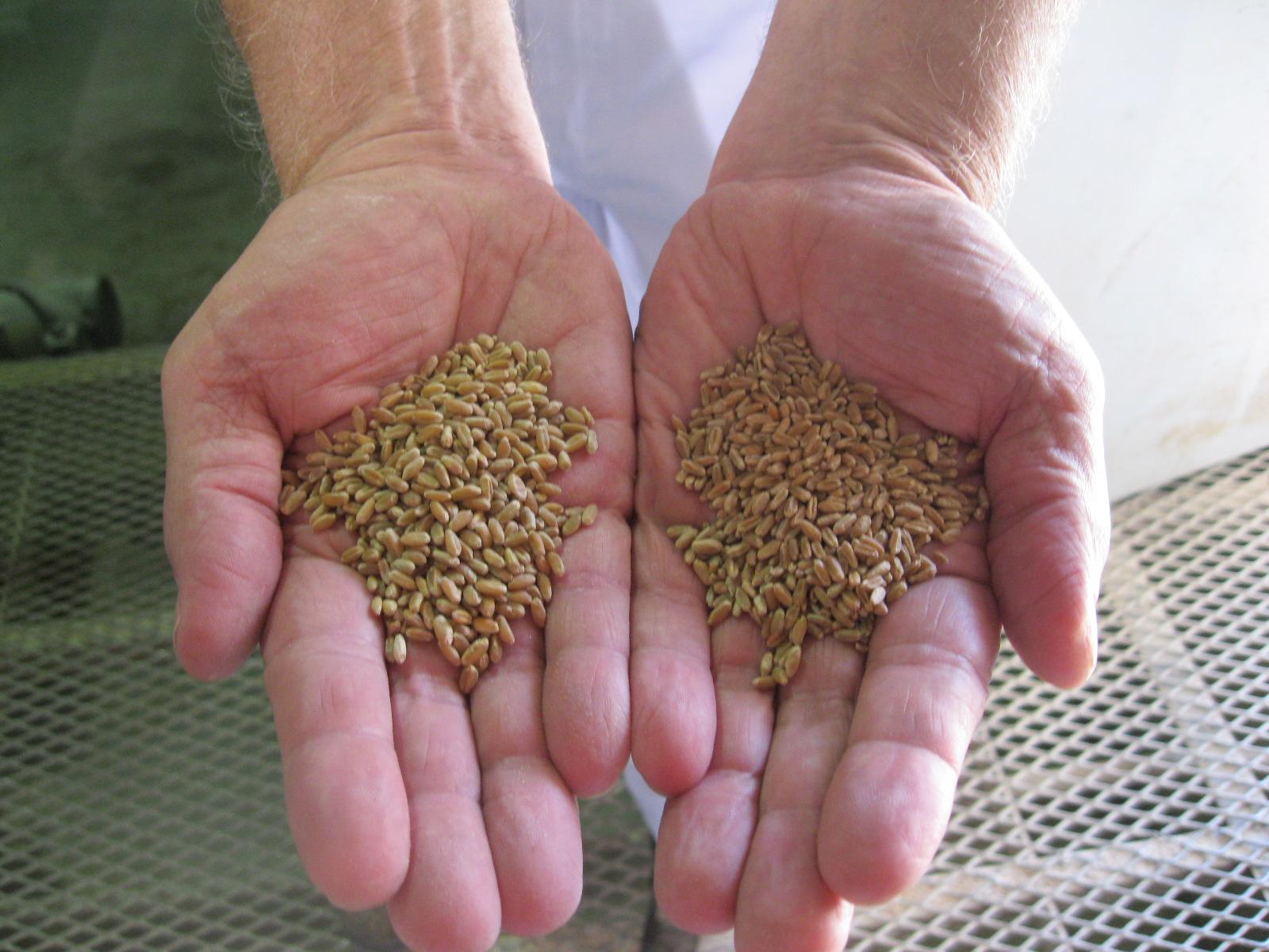 Grain Scratch Kitchen And Bar