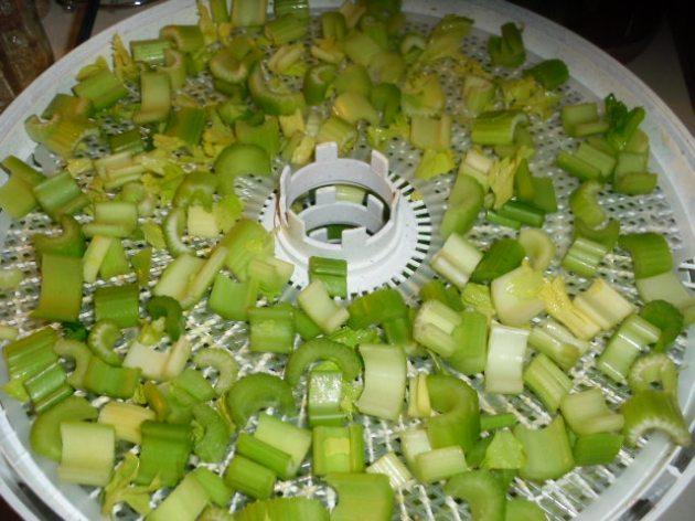 Celery in Dehydrator